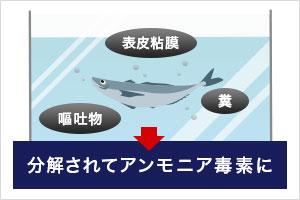 活魚類を水槽に入れるとどうなるでしょうか?