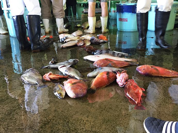 外道魚たち
